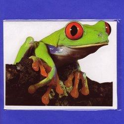 画像1: アカメ ダイカットグリーティングカード
