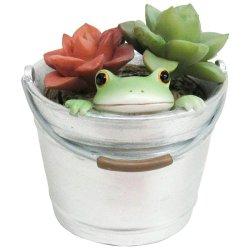 画像1: Copeau 多肉植物とカエル